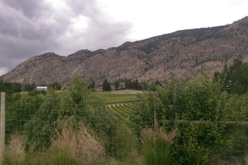 Osoyoos Vineyards on the East Bench