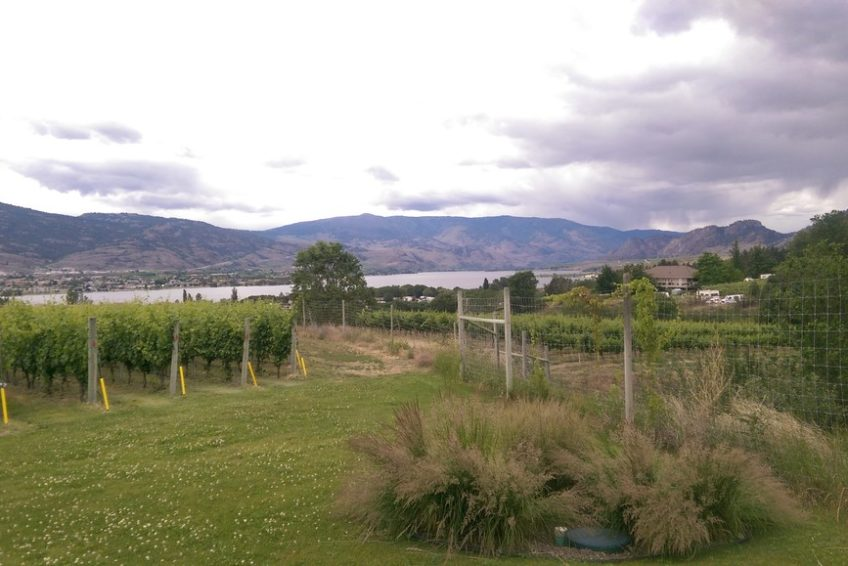 Osoyoos Vineyard on the East Bench