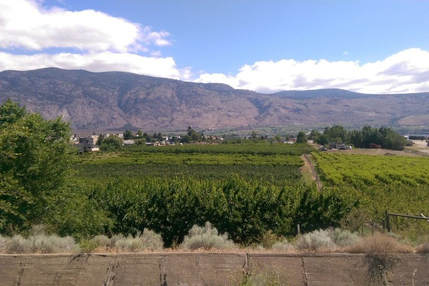 Orchards seen from the Canal Walkway in Osoyoos